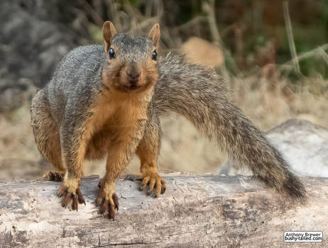 Handsome and perky squirrel