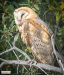 Sleepytime for night bird