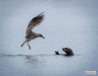 Bird vs otter