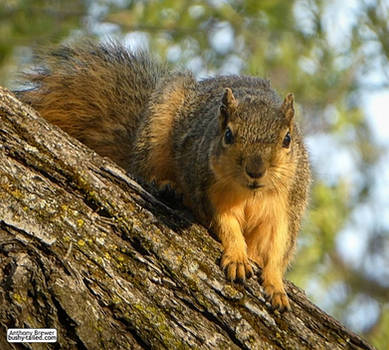 Handsome is as squirrel does