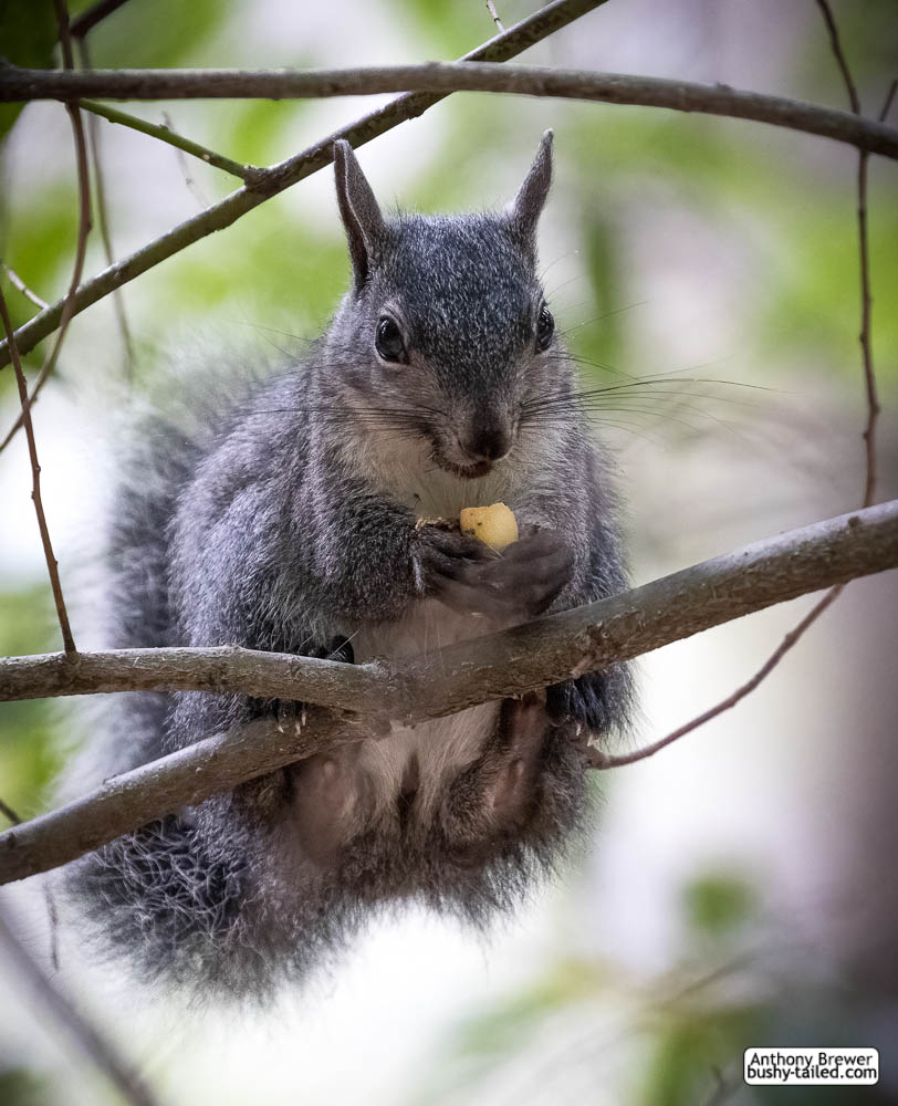Moment of squirrel