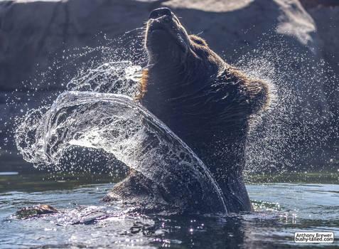 Water bear, doing a shake