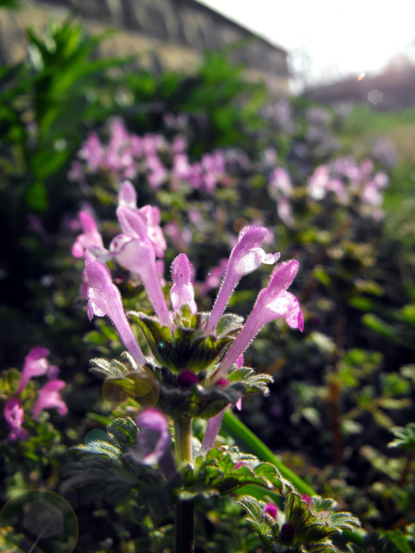 Henpeck Meadow by gobbldygook