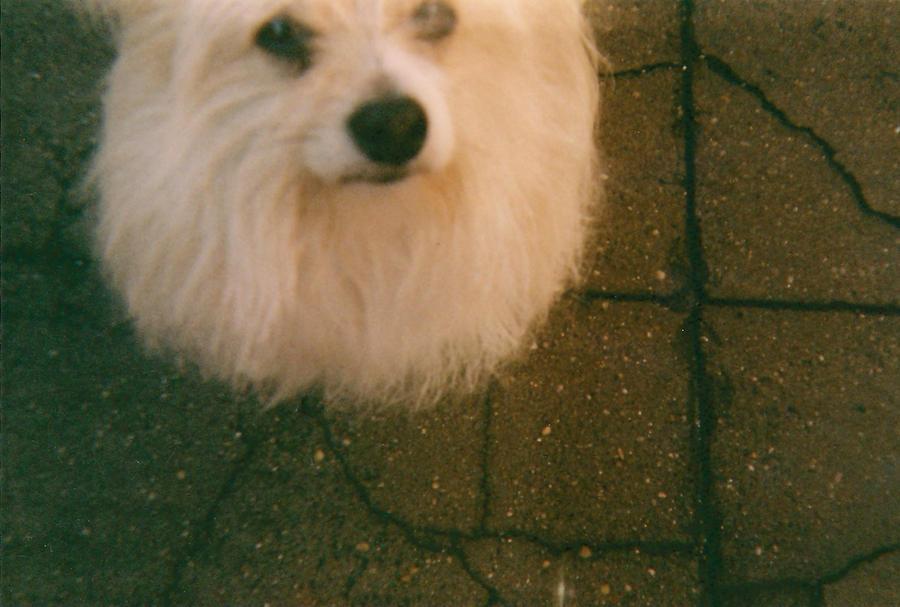 BrunoCc's Profile Picture