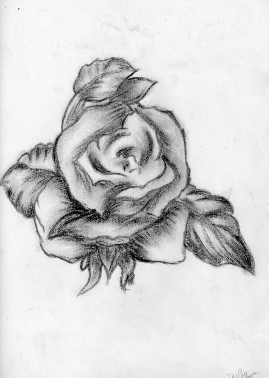 It is a photo of Zany Charcoal Rose Drawing