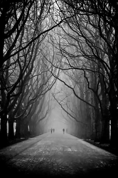 Le poesie della tua vita Trees_by_piotrus33-d1vz7df