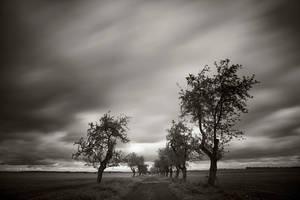 towards wind by BelcyrPiotr