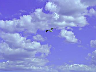 Misterious bird by Ryyko