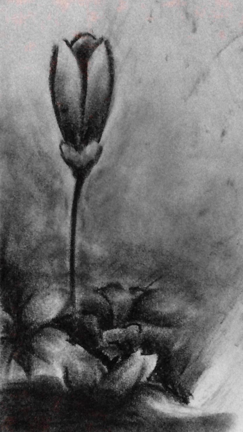 Flowers by FantasyArt99