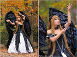 Midnight Wings