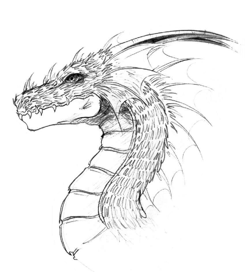 Dragon head by lastwarrior14 on DeviantArt