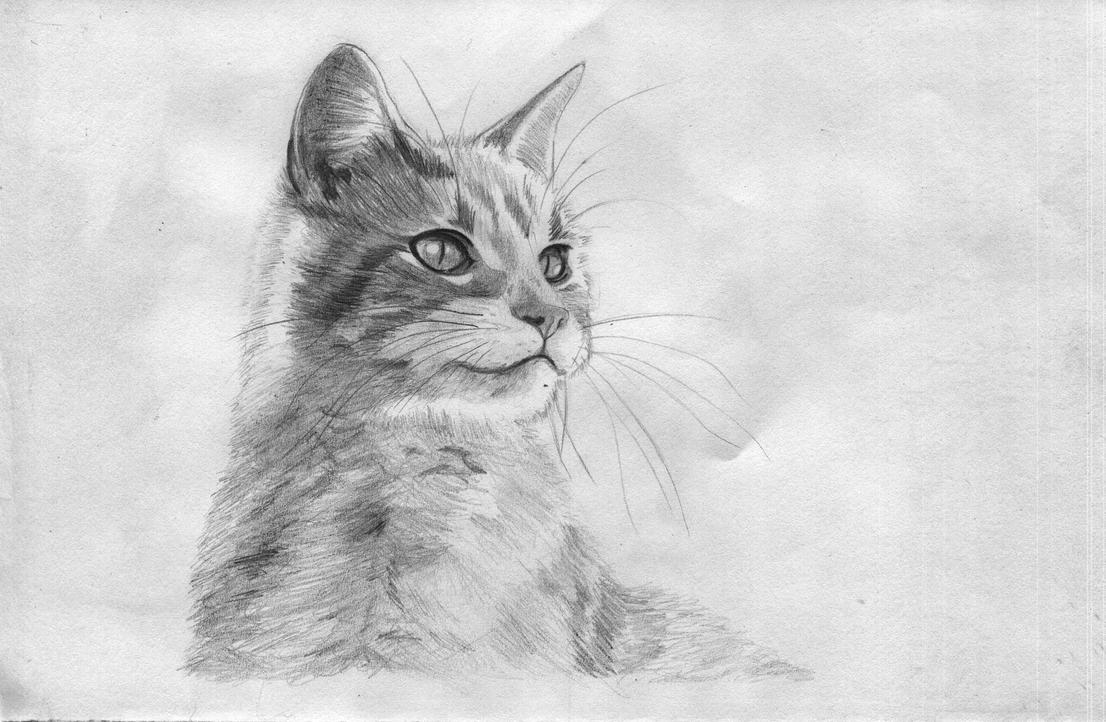 Cat face. Pencil by lastwarrior14