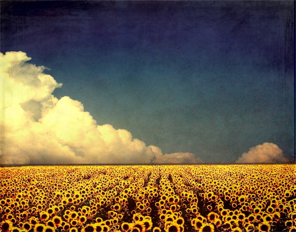 http://fc01.deviantart.com/fs27/f/2008/038/d/6/sunflower_fields_by_marielliott.jpg