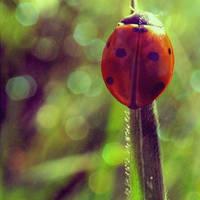 ladybird by marielliott