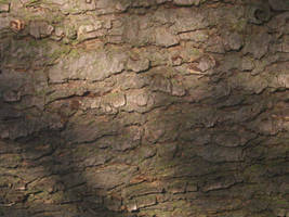 Tree Cortex Texture by SerenaDream