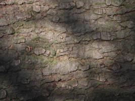 Tree Cortex Texture 2 by SerenaDream