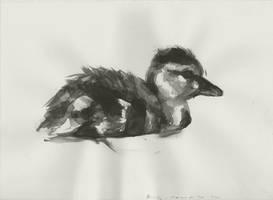 Duckling - 09102011 by AEnigm4