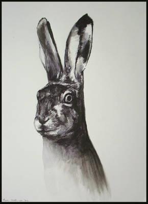 Hare - 25112011