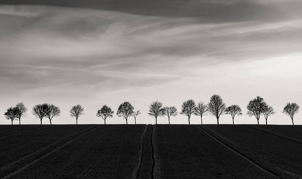 Tree Line by DudeFr0mTheHills
