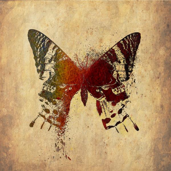 Papillon by fourteenthstar