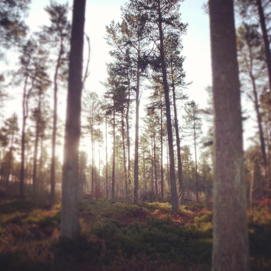 Ladbybank Woods by fourteenthstar
