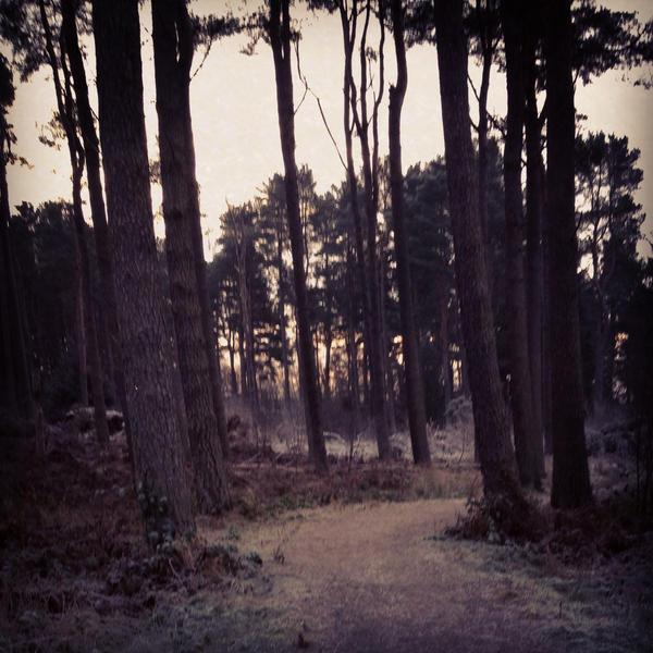 Winter woodlands by fourteenthstar