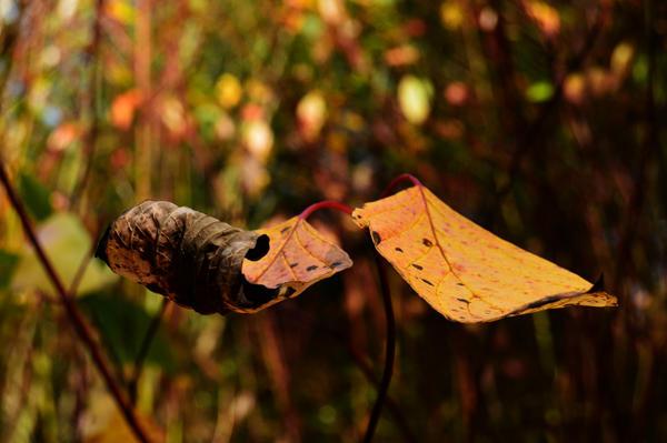October by fourteenthstar