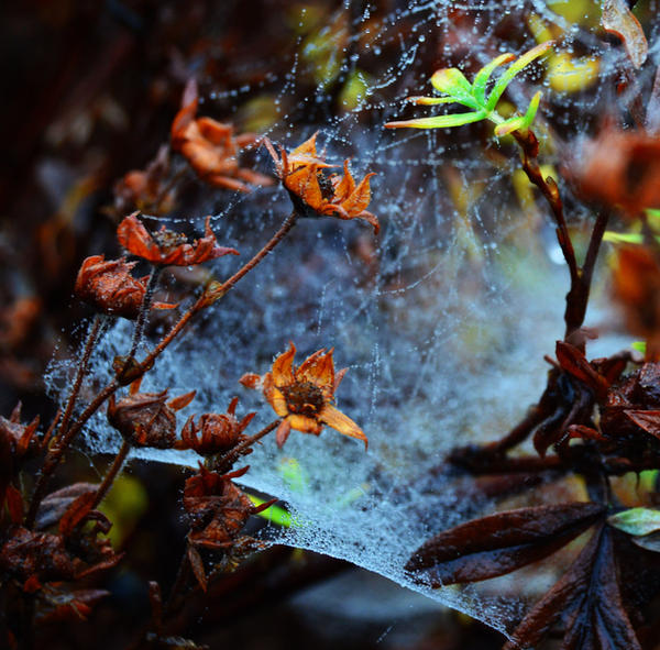 Cobwebs by fourteenthstar