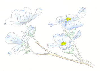 Blue dogwood by Vironevaeh