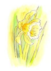 Yellow daffodil by Vironevaeh