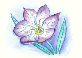 Tulip in Purple by Vironevaeh