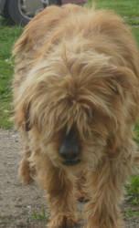 my cute dog rascal by Silverbondage