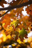 When autumn comes by PetydeNecro