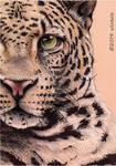 Half face of Leopard