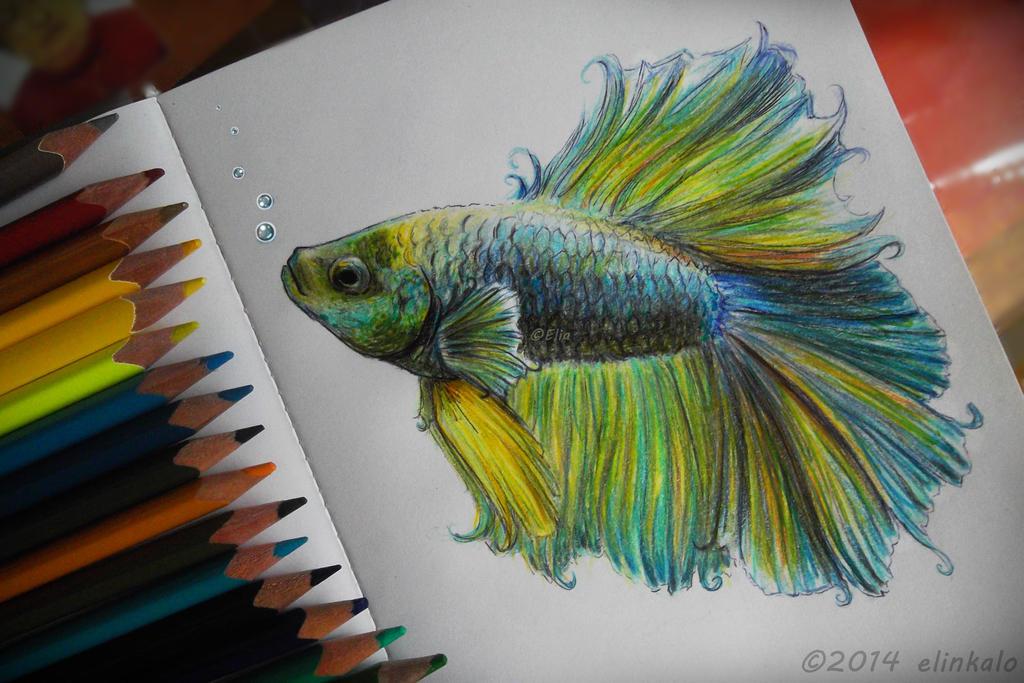 Beta Fish by elinkalo