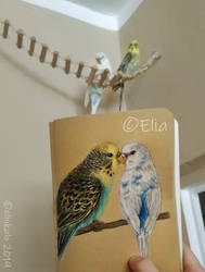 My Budgies by elinkalo