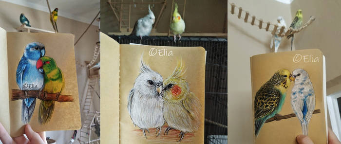 My birds and drawings