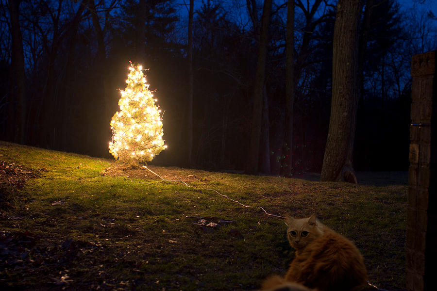 Christmas tree-itis by PrateekRajbhandari