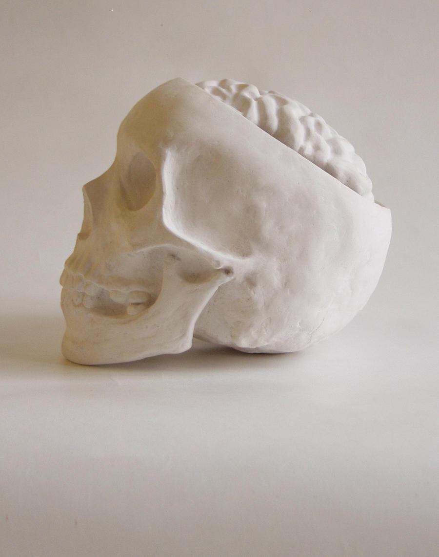 Cranium /Mozkovna by Viera8