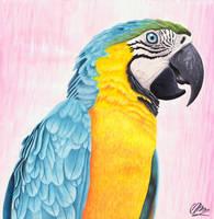 Macaw by AlienOffspring