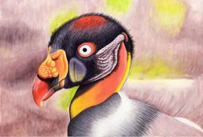 King Vulture by AlienOffspring