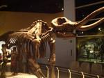 royal tyrell museum 5