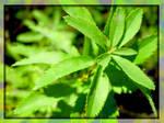 Wild Plant by Juya2214