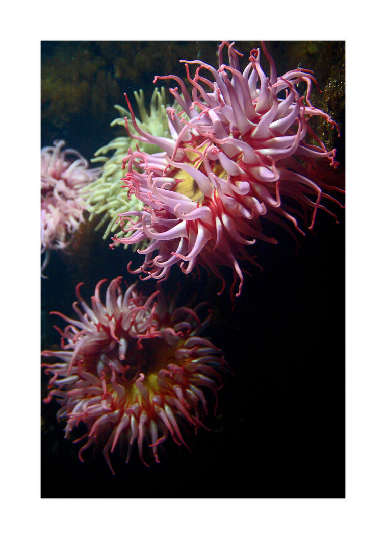 life aquatic 2 by JamesDManley
