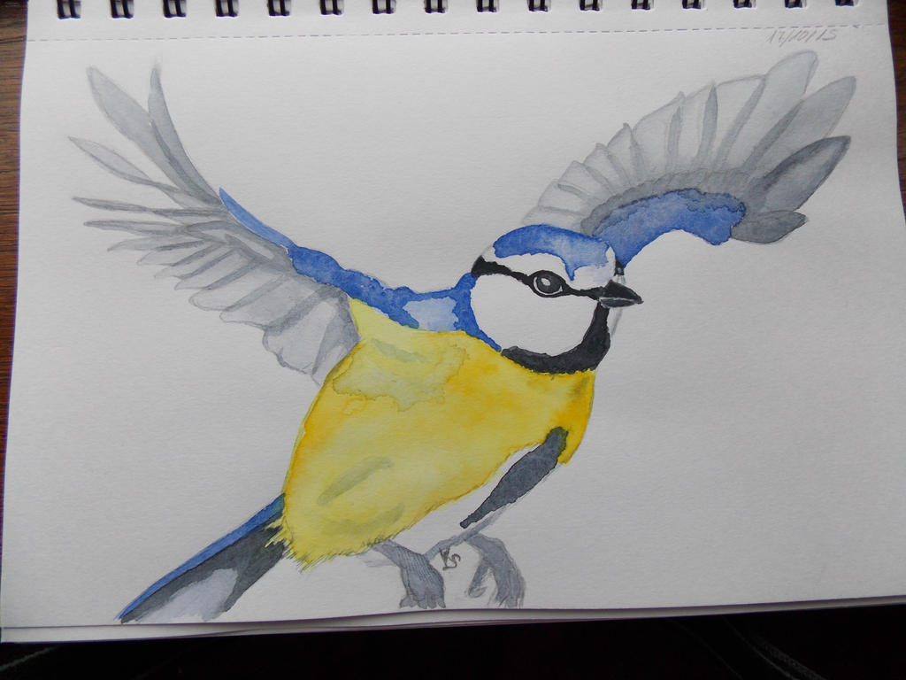 blue tit by Allraune