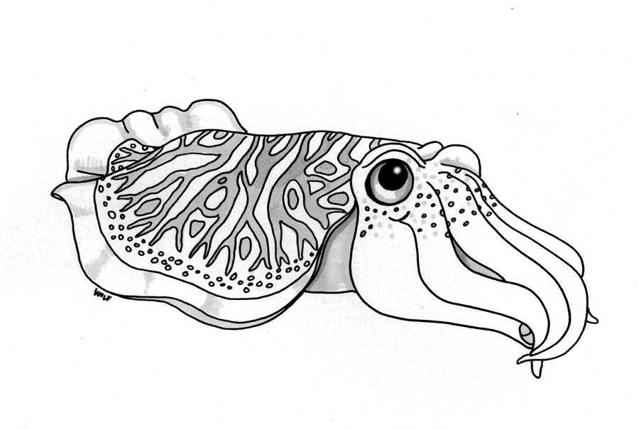 Cuttlefish by ArchangelRobriel on DeviantArt