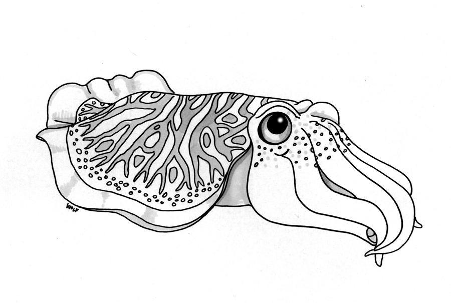 Cuttlefish by ArchangelRobriel on DeviantArt