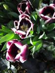 Matthei Botanical Gardens