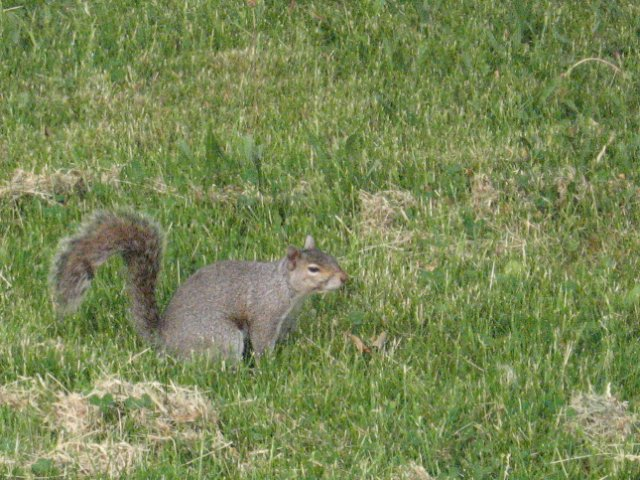 A Nutty Critter by AchisutoShinzo