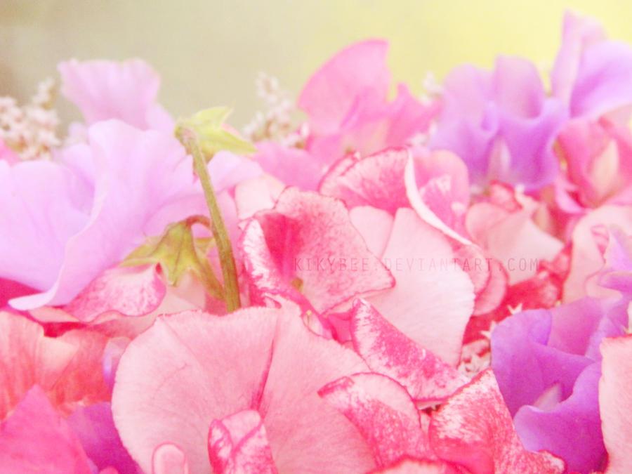 Pea Flowers by KikyBee